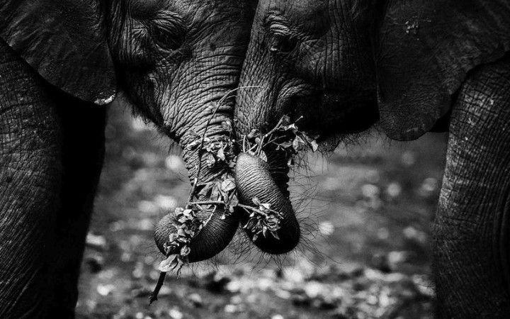 Grandes animais de África