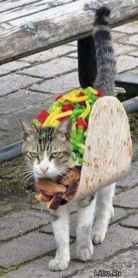 Taco Cat | 30 Hilarious And Inventive Cat Costumes For Halloween