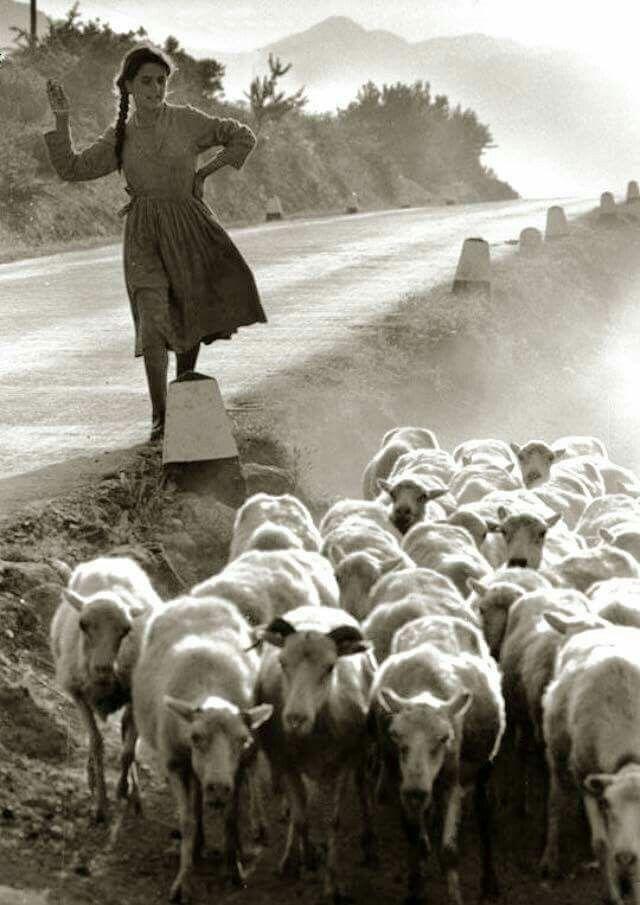 Pastorella del Campidano  #Sardinia