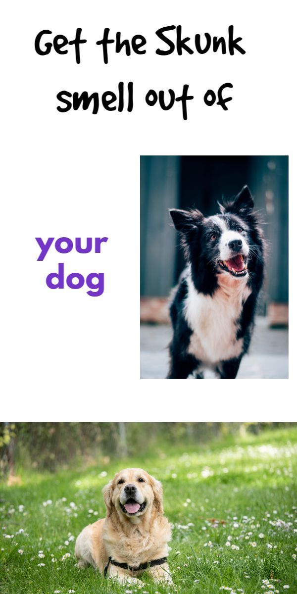 what to use to get skunk smell out of dogs