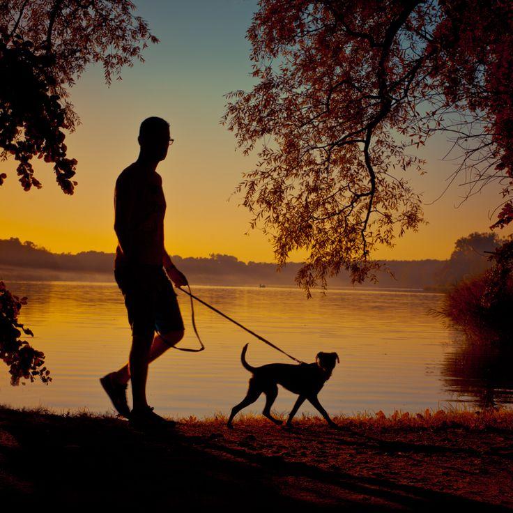 Jezioro Rusałka - Poznań #Poznan #Poznań #fotograf #photography #instagram #fotografiauliczna #street #streetphotography #ulica #uliczna #photooftheday #instagood #Rusałka #weekend #spacer #dog #pies #przyjaciel #6x6