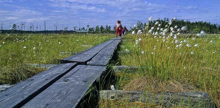 Patvinsuon kansallispuisto - Luontoon.fi