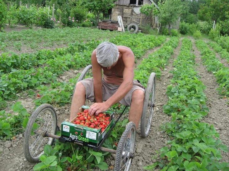 harvester for picking berries