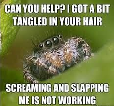 "The Best Of The ""Misunderstood Spider"" Meme"