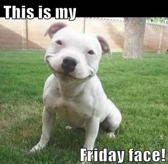 Funny Animal Friday Meme : Happy friday memes cute animals pinterest the o jays