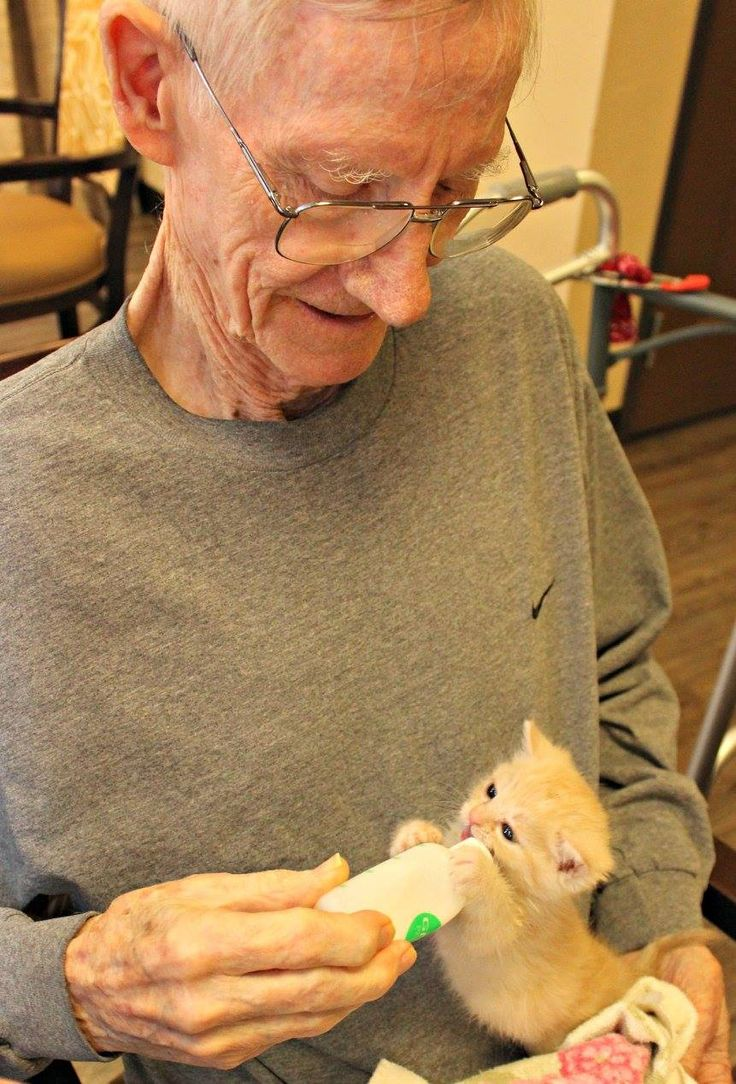 Nursing Home Gives Residents Foster Kittens To Care For, Happiness Ensues
