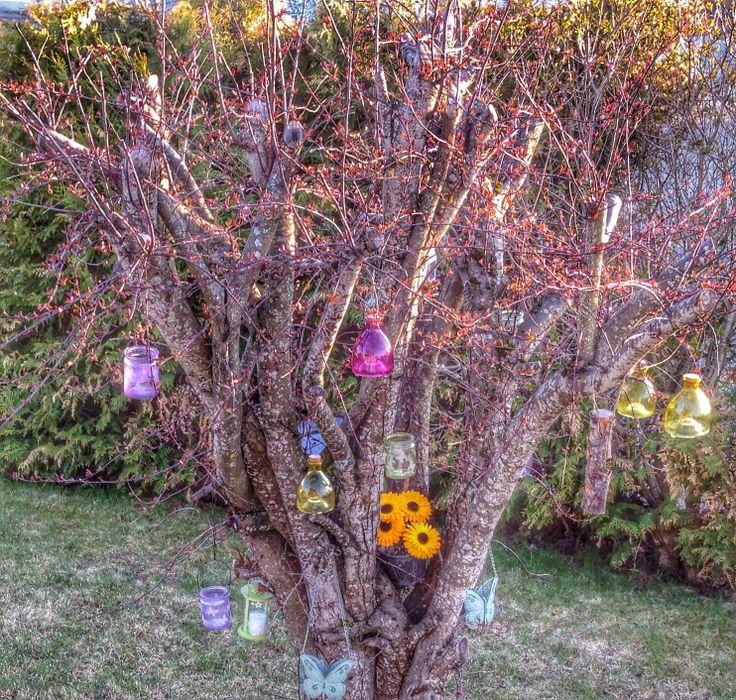 Tree in my garden:)