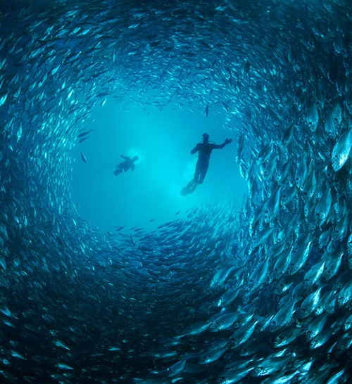 dreaming: Underwater Photos, Schools Of Fish, Scubas Diving, Underwater Photography, Sea, Places, Underwaterphotography, Natural, Deep Blue
