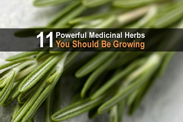 In addition to adding flavor to food, many medicinal herbs are high in antioxidant, anti-inflammatory, and antiseptic properties.