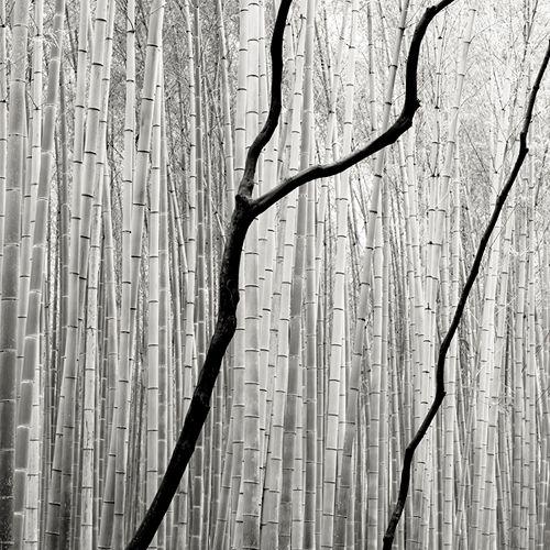 Giant Bamboo 2 by Josef Hoflehner.
