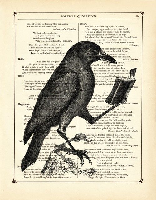 Raven Crow reading a book Animal Natural History - Vintage Victorian Book Page Art Print Steampunk