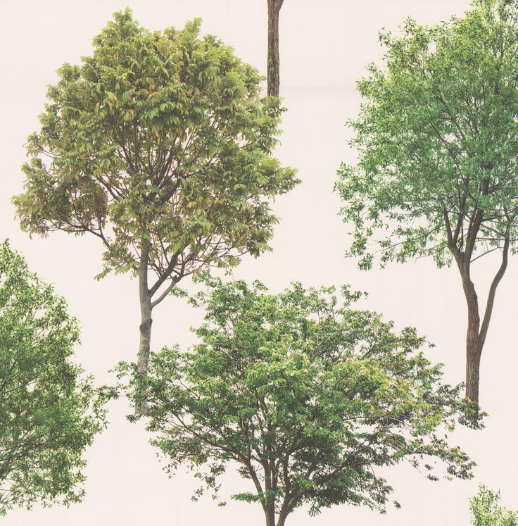 Treescape Green wallpaper by Albany