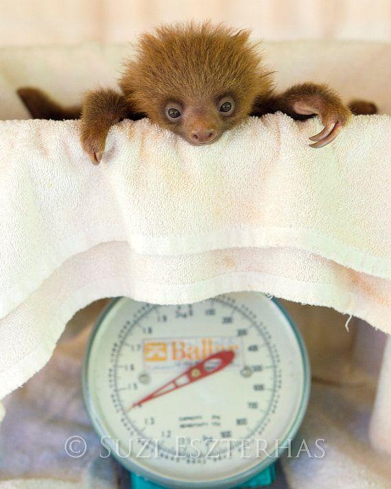 SCHATTIGE BABY LUIAARD foto afdrukken Baby dieren fotografie