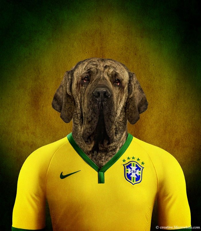 Brazil – Brazilian Mastiff