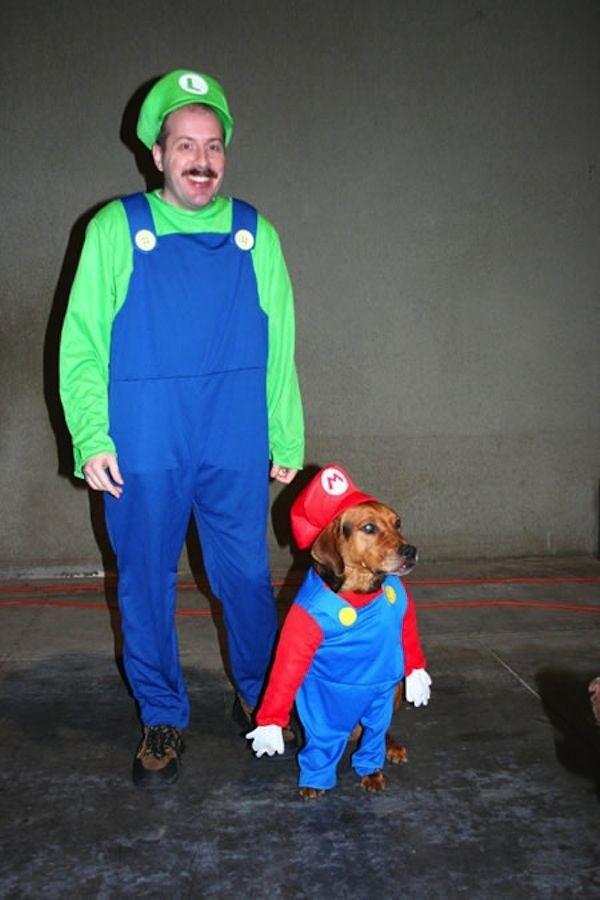 79 best perros disfraces images on Pinterest | Costume halloween ...