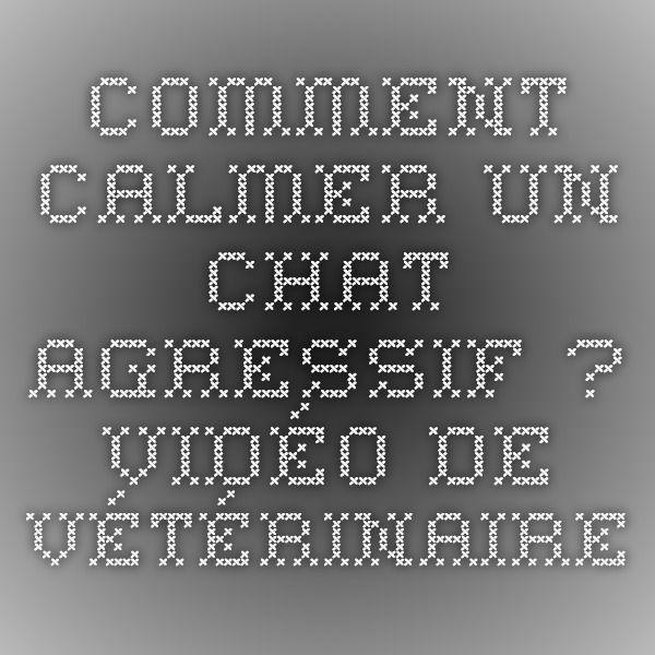 Comment calmer un chat agressif ? - Vidéo de vétérinaire