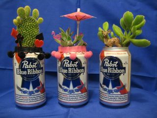 PBR and succulents! OMG!!! I can get my Joseph involved in my succulent hoarding now!!! YAY!!!
