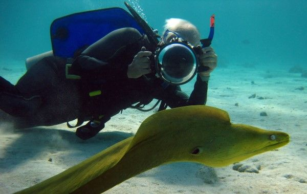 Marine Biology  Marine Biology  Fiji Snorkeling  Ocean Futures