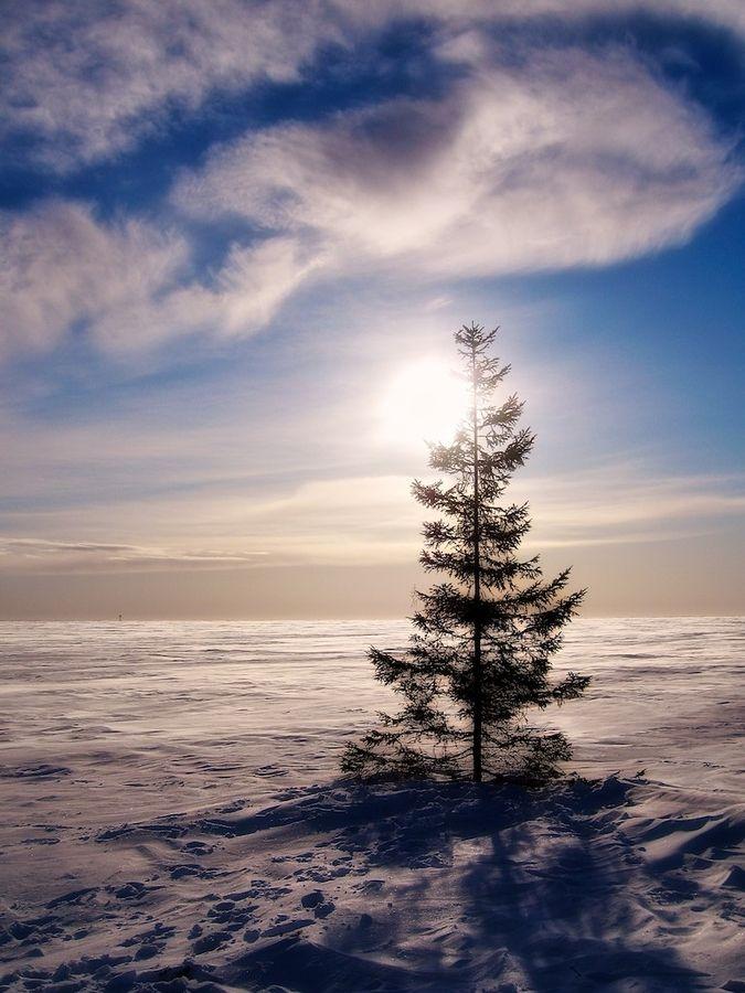 Soledad in Lapland