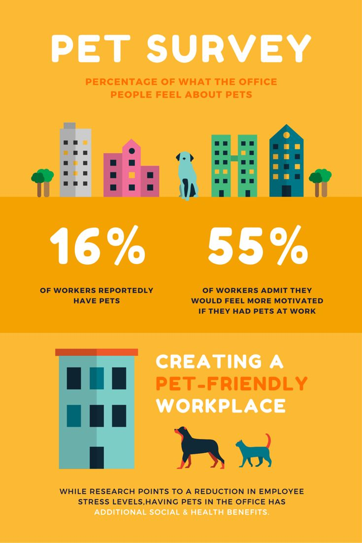 best ideas about world rabies day veterinary should you have dogs in the office we asked 1000 workers and the results are surprising our infographic will show surprising results to our survey