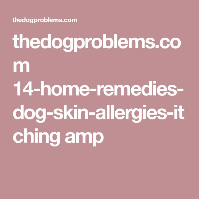 how to stop dog itching home remedies