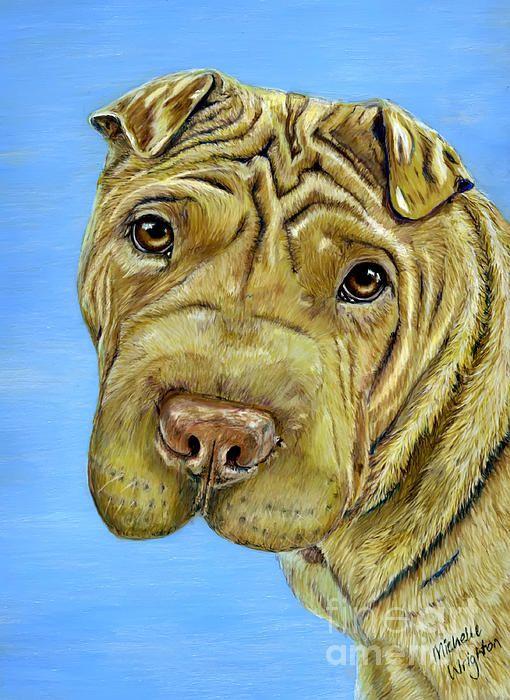 Custom pet portrait. Shar-Pei color pencil and acrylic painting by pet portrait artist Michelle Wrighton.  Prints available. http://www.michellewrighton.com