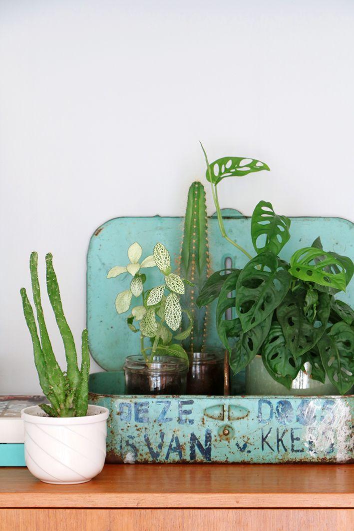 Decoratie Planten Binnen.Binnenkijker Bij Ons Thuis Een Complete Hometour Home Thuis