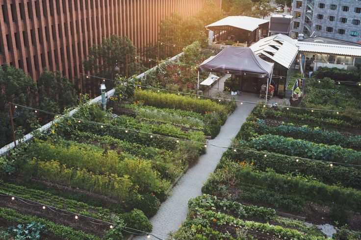 http://www.ignant.de/2015/10/01/stedsans-rooftop-farm-restaurant-copenhagen/  stedsans_copenhagen_044