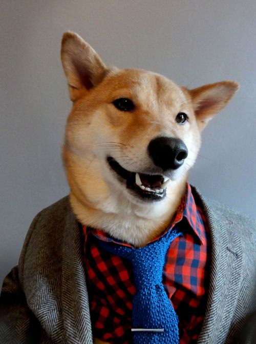 GQ Menswear dog