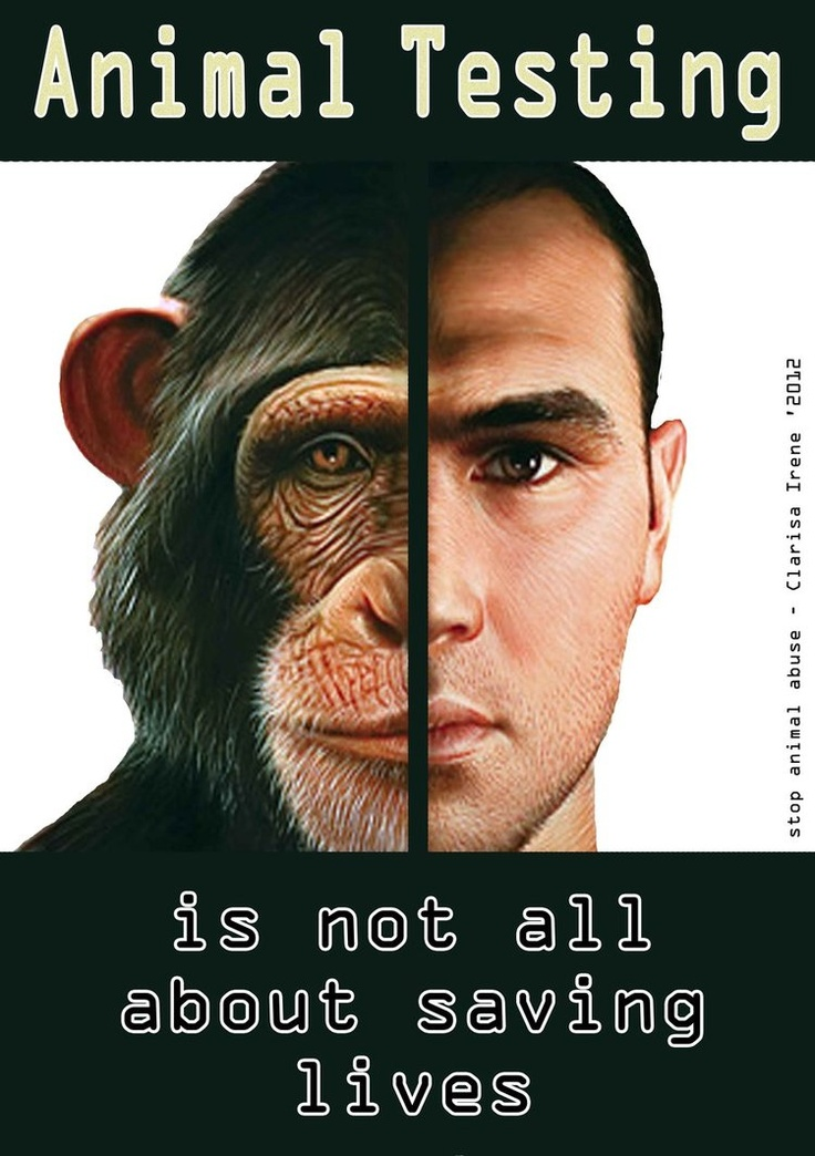 why is animal cruelty wrong essay 5 reasons testing on animals makes we do not support testing on animals 3 cruelty-free products essay on why animal testing should be.