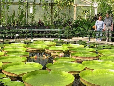 I Kew Gardens, o Royal Botanic Gardens, sono i giardini botanici reali, un vero gioiello da non perdere a Londra. http://www.marcopolo.tv/regno-unito/kew-gardens-guida-londra