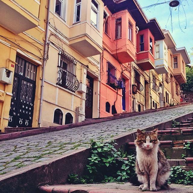 ♪ Arnavut kaldırımlı taş sokakta ♫ ♪