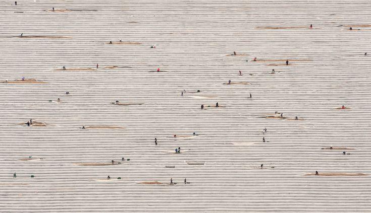 Una foto aerea di un campo di asparagi. Elsholz, Germania