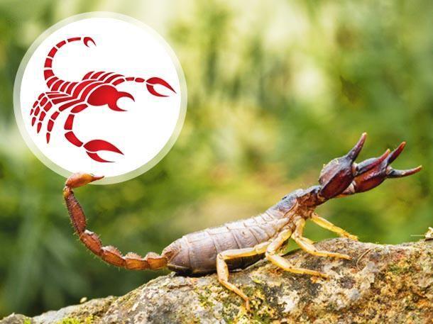 Skorpione neigen zur Unauffälligkeit – aber nur zur Tarnung! Welche Eigenschaften Skorpion-Geborene noch ausmachen, lesen Sie hier.