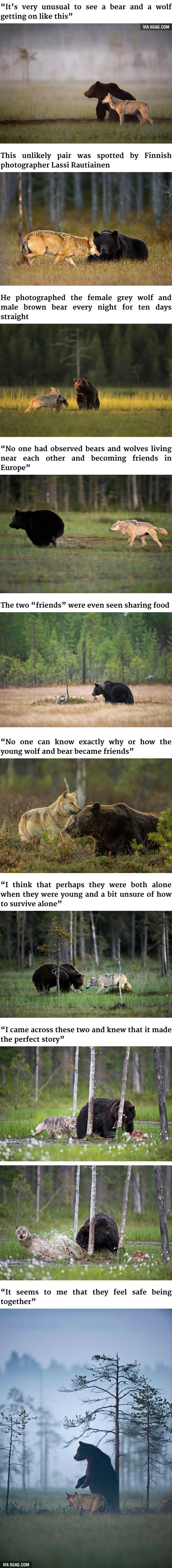This animal relationship proves how important contact and companionship are - to us all!