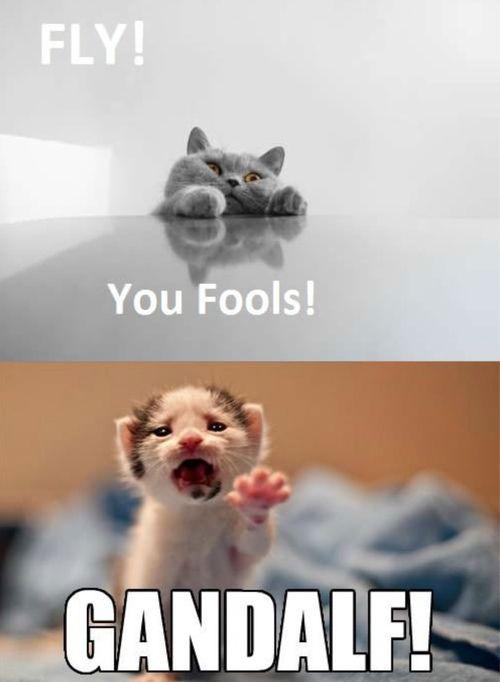 Gandalf cat: FLY! You fools! Frodo cat: GANDALF!