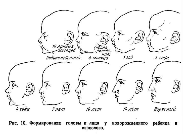 Особенности строения челюстно-лицевой области ребенка | Акушерство, роды, питание, здоровье и воспитание детей, детская психология