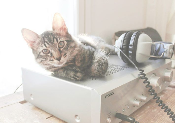 Is Smart Home Technology Good for My Pets