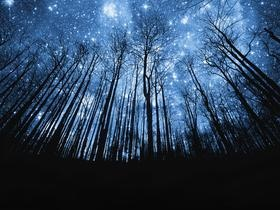 starry night: Forests, Starry Sky, Dreams, Wood, Wallpapers, Trees, Photo, Eye, Starry Night Sky