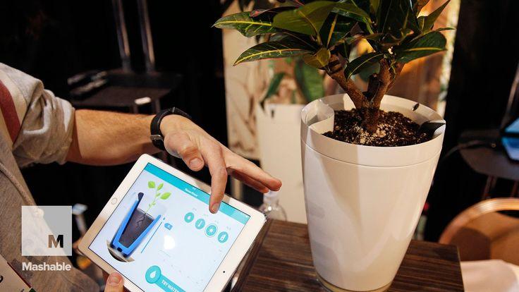 http://blog.parrot.com/2015/01/05/ces-2015-flower-power-pot-the-smart-pot-that-grows-healthy-plant/