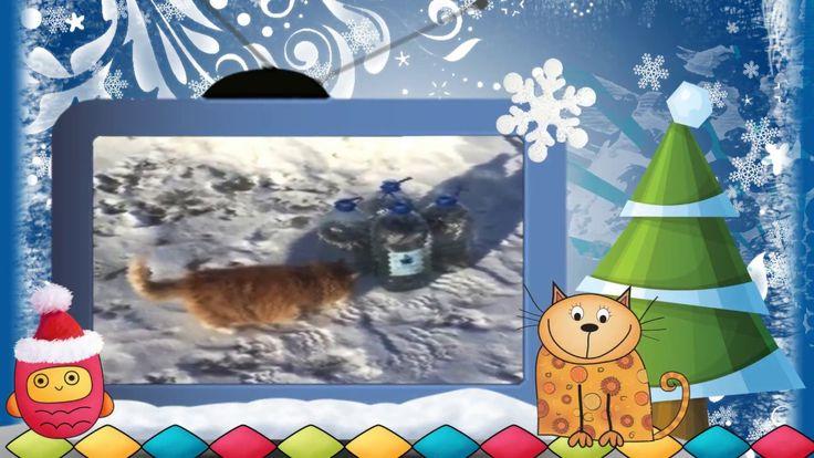 #Видеоклип Зимние #коты. Серия 13. Видео #клип Зимние коты. серия 13. Ко...