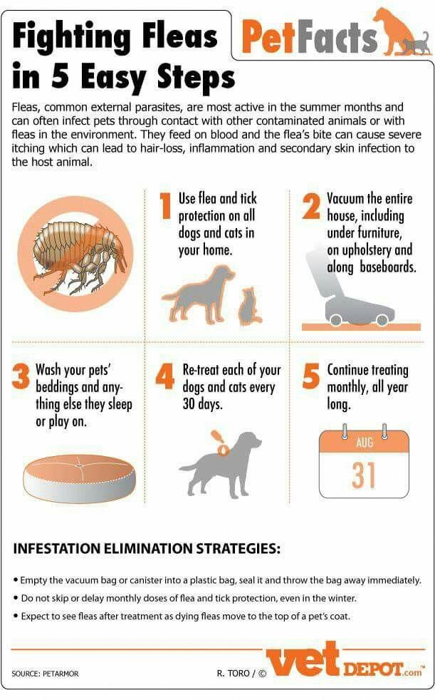 Can Cats Eat Dog Food Doescatscry Refferal 4019506261 Fleas Dog Infographic Dog Care Tips