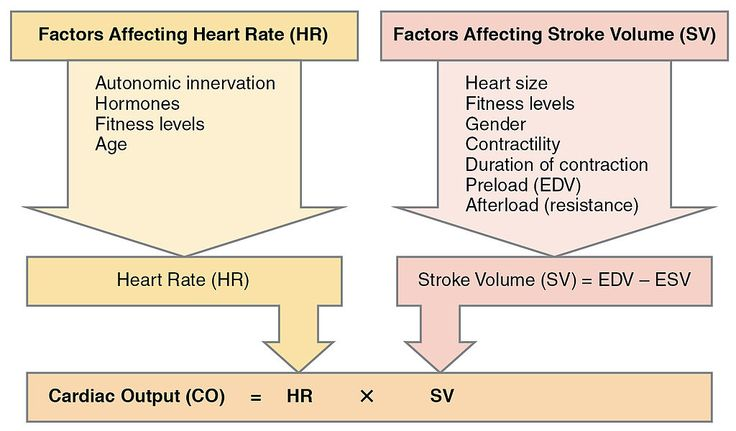 Which option is the best definition for cardiac output