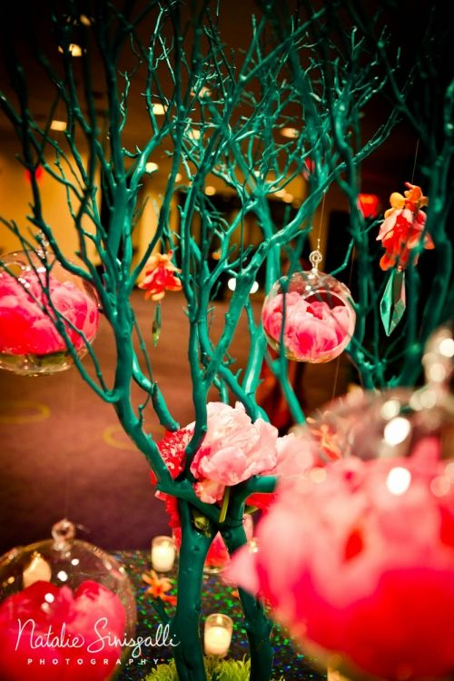 Natalie sinisgalli photography teal and coral tree