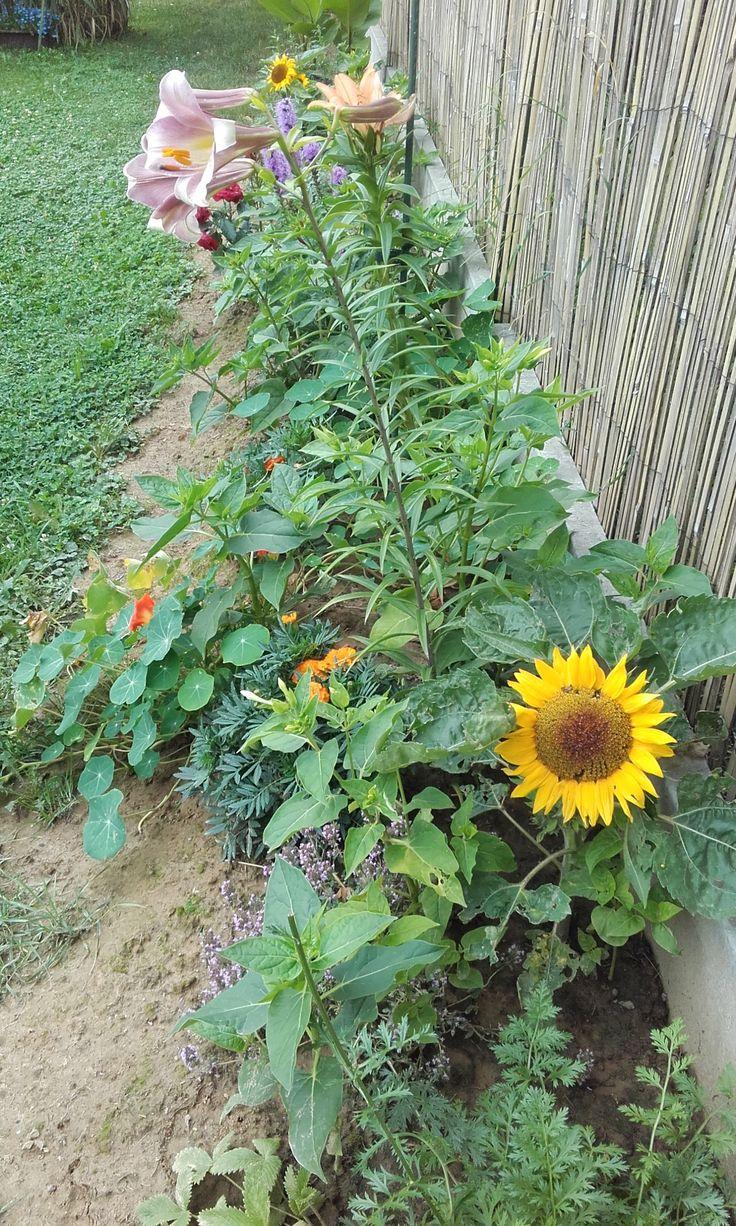 Květinový záhon - půlka července 2016