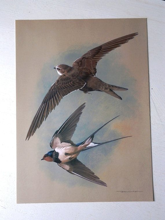 Vintage Bird Book Plate Page of Swift & Swallow by TheLuckyFox, $14.00