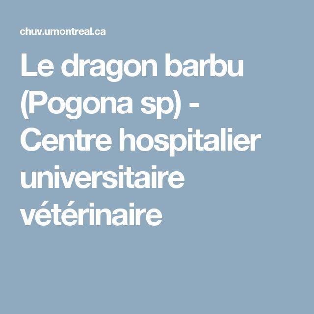 Le dragon barbu (Pogona sp) - Centre hospitalier universitaire vétérinaire