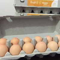 Chicken eggs from #BushChickEggs have scored a rating of 9.1 out of 10 for excellent display of integrity throughout their farming operation, producing an excellent quality product.