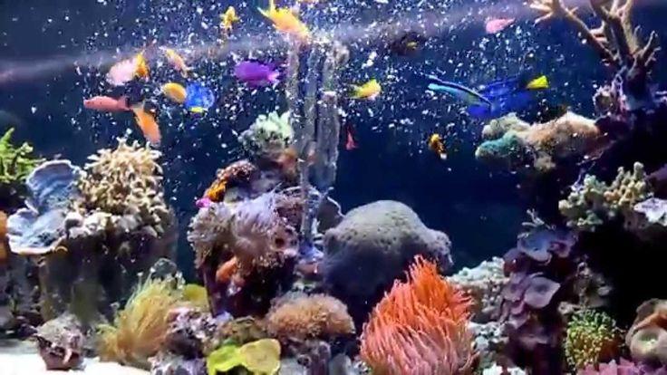 Akwarium morskie rafowe-projektowanie, budowa, realizacja Argus Aqua Des...
