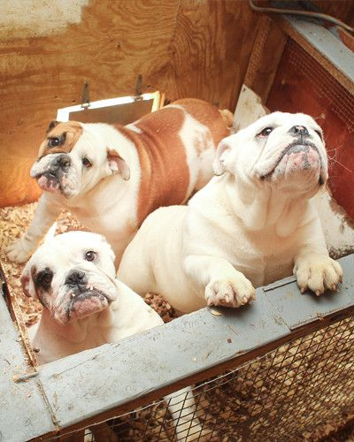 4 Ways To Stop Puppy Mills (And Why You Should Care)